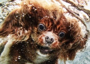 diving-dogs-photography2-550x395