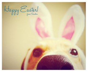 happy-easte-dog